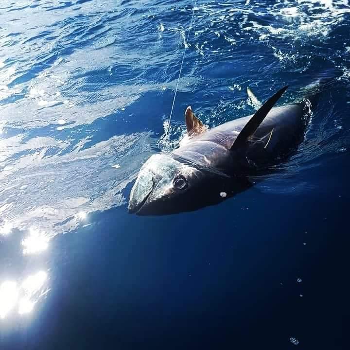 I trecciati per il drifting al tonno rosso